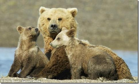 Мама и детёныши