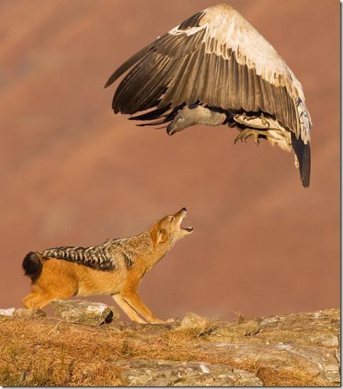 Потрясающий мир животных