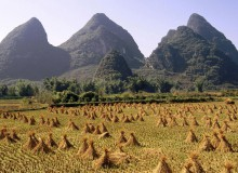 Harvested ricefield. Li River Area. Yangshuo. Guangxi province. China