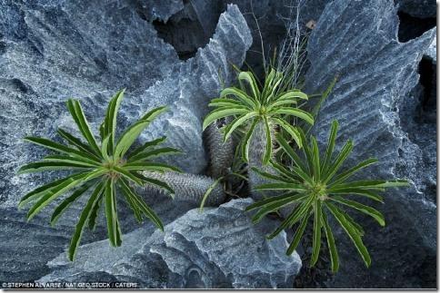 Среди зловещего окружающей среды, есть зеленые растения