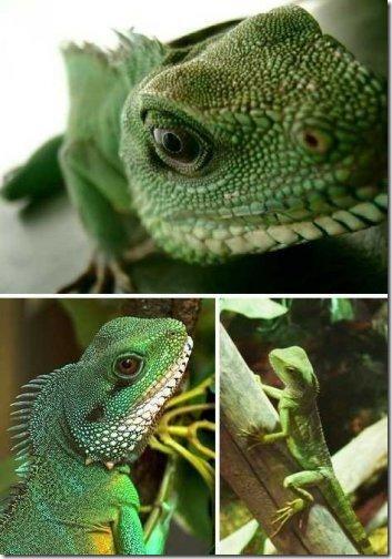 dragon04