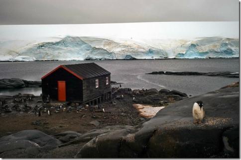 pingvin12
