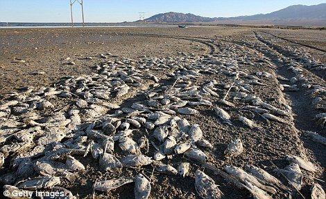 На канадском озере Эри погибли тысячи рыб и чаек