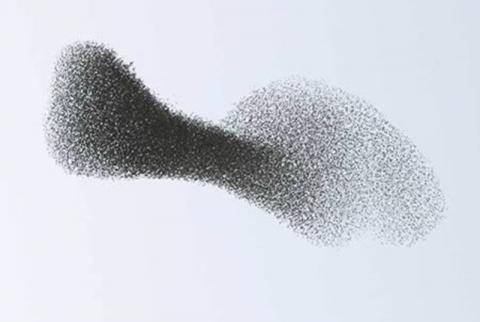 ptichki-morfologiya07