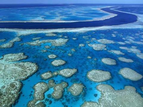 За последние 27 лет исчезла половина Большого барьерного рифа