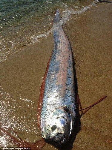 На Мексиканское побережье выбросило шестиметровую рыбу