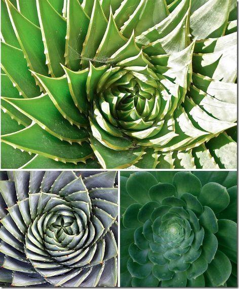 spirali_v_prirode-03