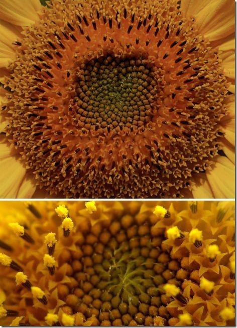 spirali_v_prirode-05