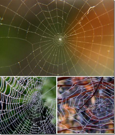 spirali_v_prirode-06