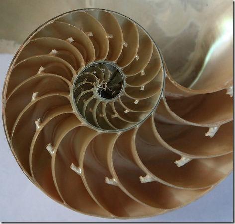 spirali_v_prirode-07
