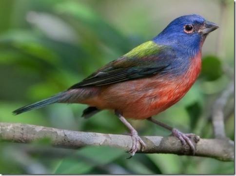 birds-06