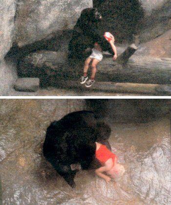 Горилла спасла ребенка