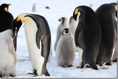 pinguin_04