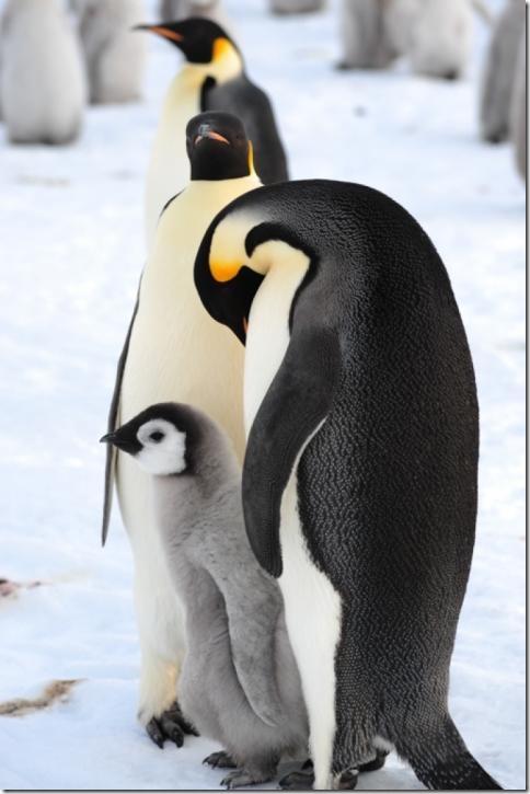 pinguin_05