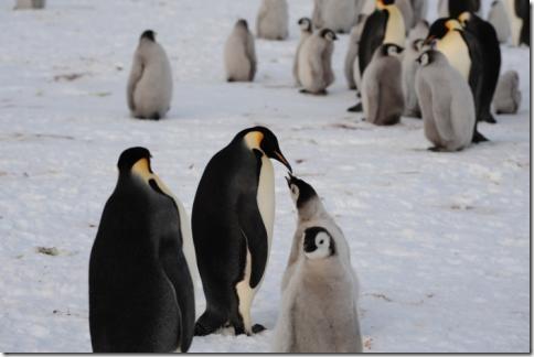 pinguin_06