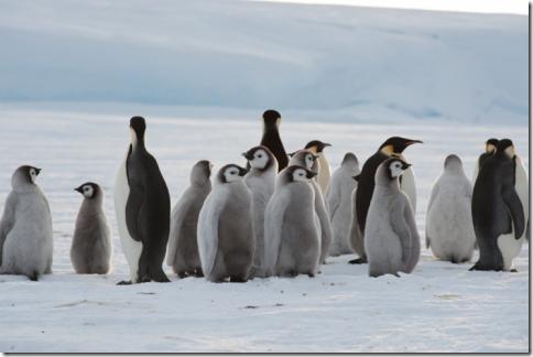pinguin_07