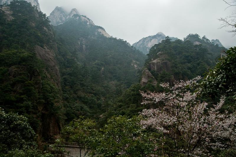 Цветение в горах