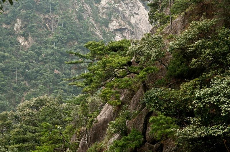 Горы и сосны