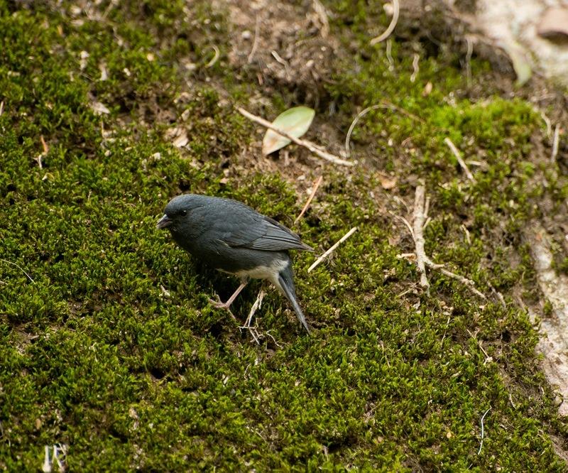 Малая пташка