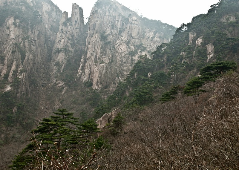 Сосны и горы