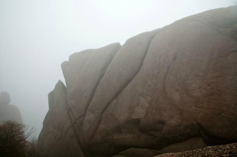 Голова черепахи в тумане