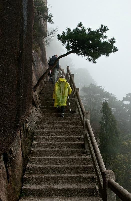 Сосна над лестницей