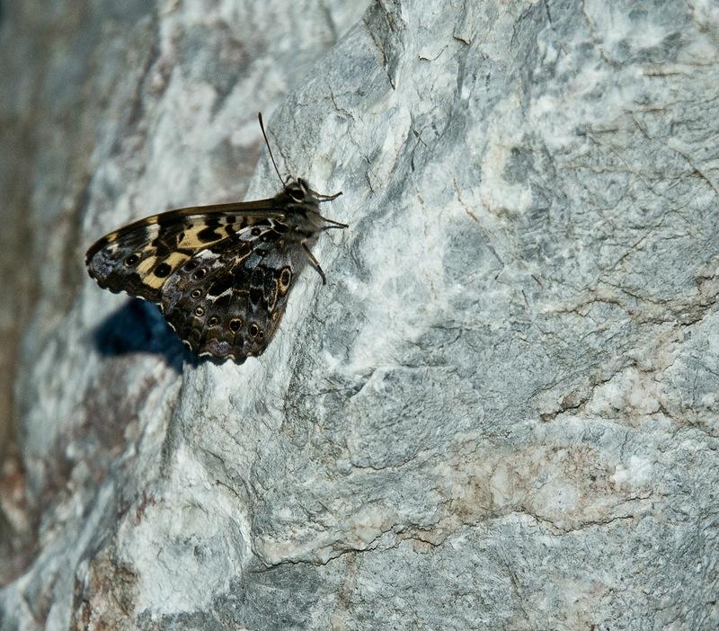 Бабочка на камне