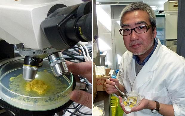 """Профессор Тошуко Накагаки и его """"питомцы""""."""