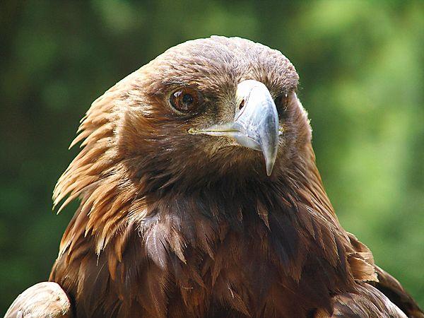 Птичье правительство