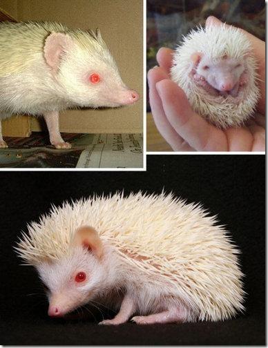 albinosi04