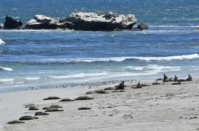 Львиный пляж