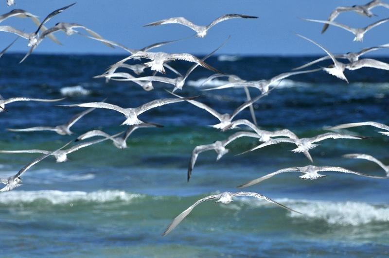 Полет над синим морем