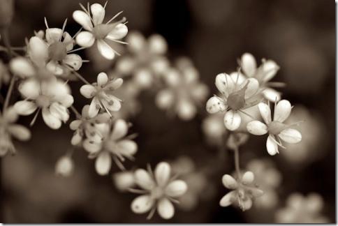 flower08