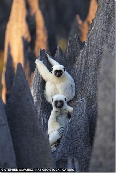 Самый большой в мире каменный лес на Мадагаскаре
