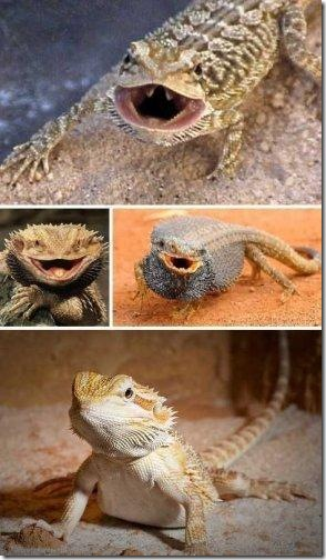 dragon08