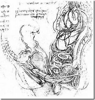 Рисунки Леонардо да Винчи - Анатомия человека