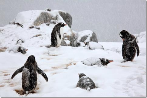 pingvin04