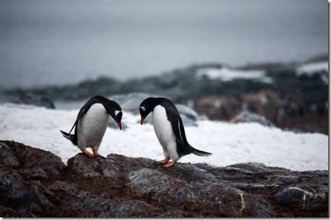pingvin07