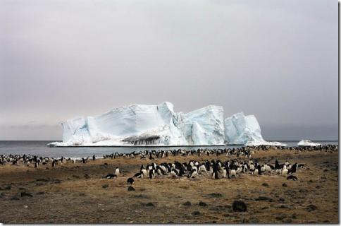 pingvin09