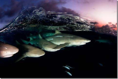 podvodnii-mir02