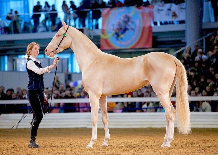 horse-izobel-09.jpg