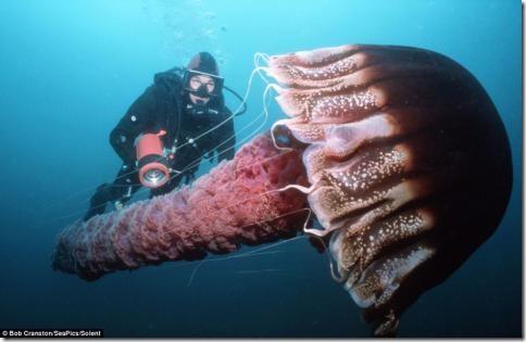 morskiesushestva01 thumb Глубоководные съемки магических существ