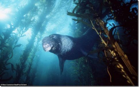 morskie-sushestva02