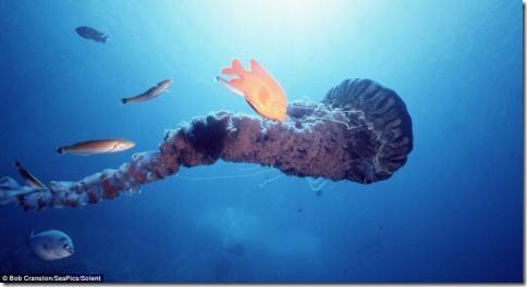 morskiesushestva03 thumb Глубоководные съемки магических существ