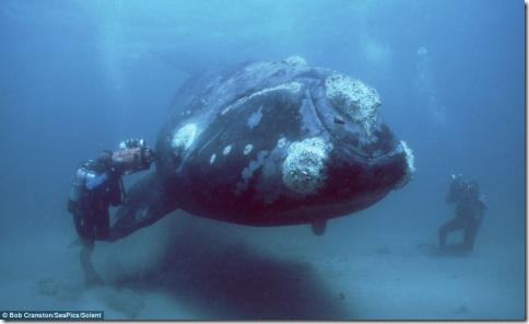 morskie-sushestva05