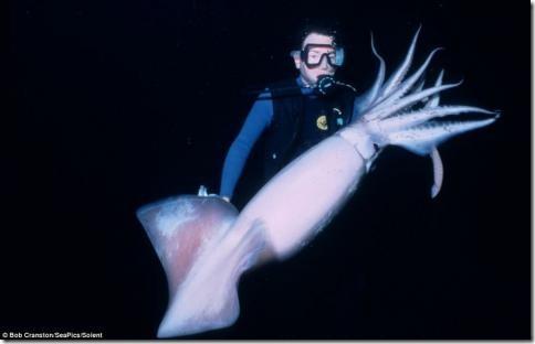 morskiesushestva06 thumb Глубоководные съемки магических существ