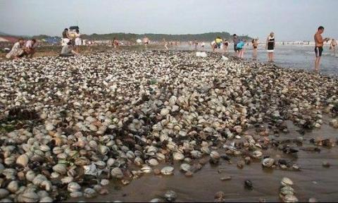 Тайфун принёс России морепродукты