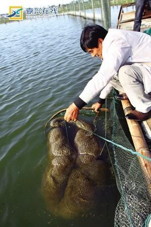 В рыбном пруду Чжэцзян развилось неизвестное желеобразное биосущество