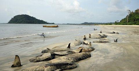 40 мертвых китов