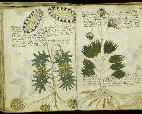 Таинственный манускрипт Войнича